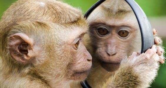 spiegelen mens en dier