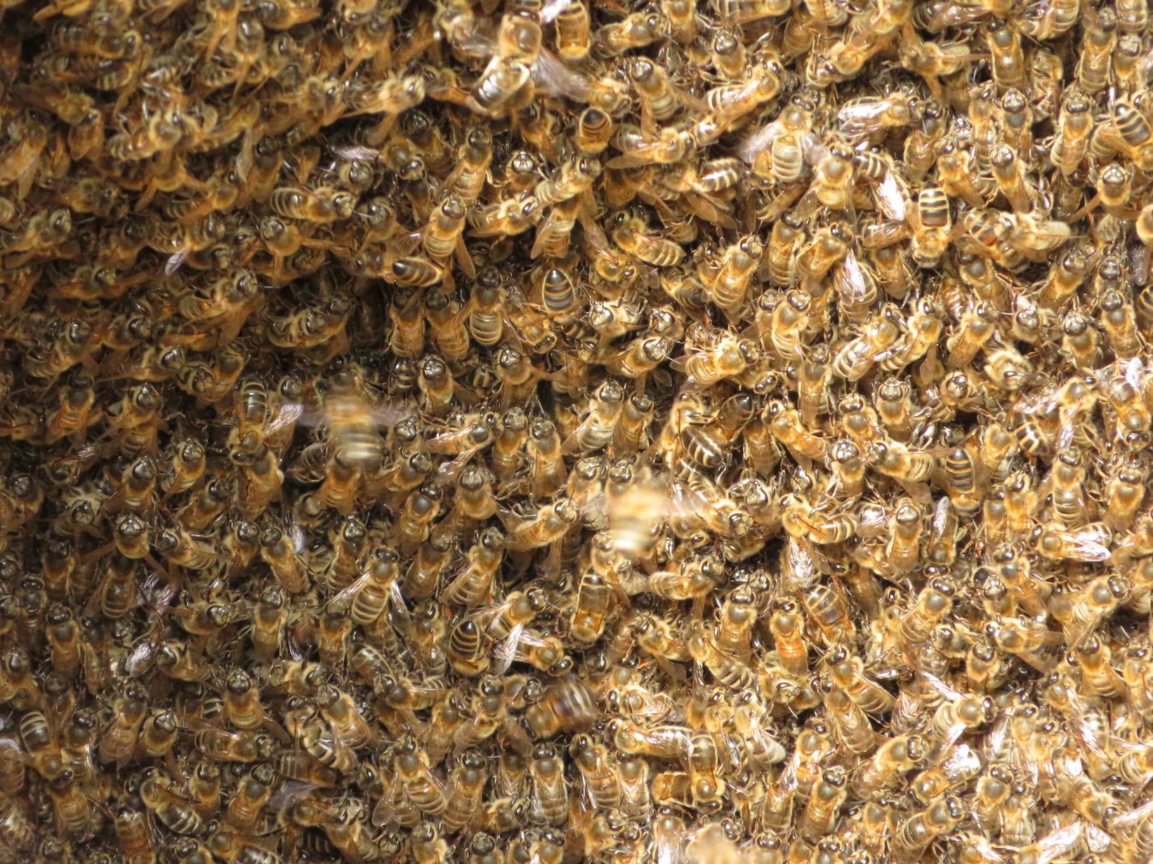 Bijen zorgen voor verbinding